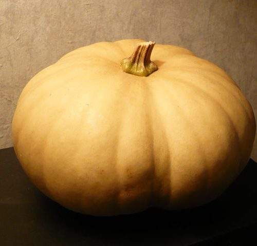 Long_Island_Cheese_squash